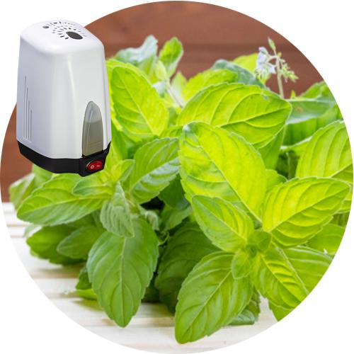 Slice Aloe Vera a very useful herbal medicine for skin care and